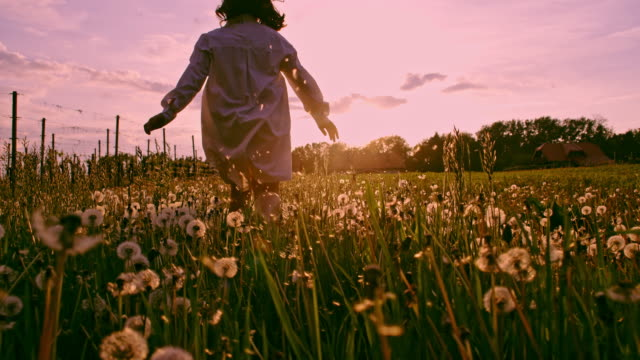 SLO MO LA TS Young girl running through dandelions at sunset