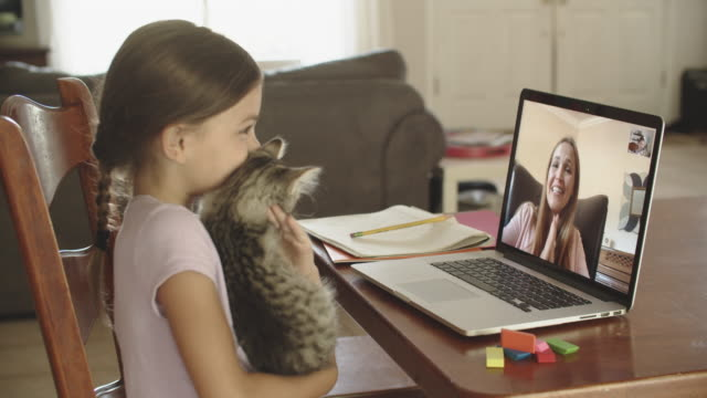 young girl showing her teacher her kitten during video conference - child stock videos & royalty-free footage