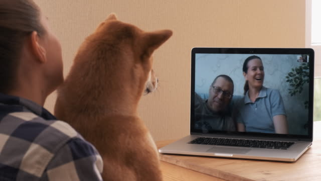 young girl shows a dog in a video chat with parents on a laptop - イヌ科点の映像素材/bロール