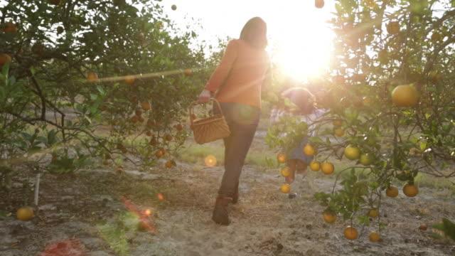young girl skipping ahead of mum in orange orchard. - オレンジの木点の映像素材/bロール