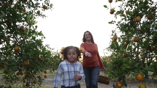 young girl skipping ahead of mum through orange orchard. - skipping along stock videos & royalty-free footage