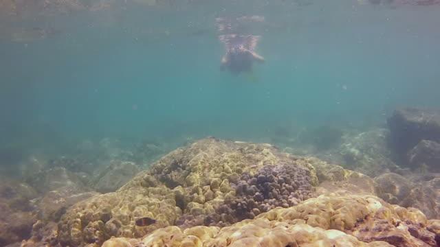 vídeos y material grabado en eventos de stock de chica joven haciendo esnórquel en un arrecife fotos de poca profundidad - sólo una adolescente