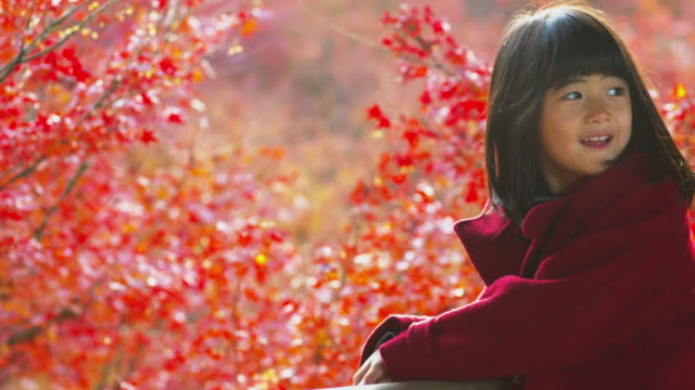 young girl viewing autumn leaves in japan - shrine stock videos & royalty-free footage