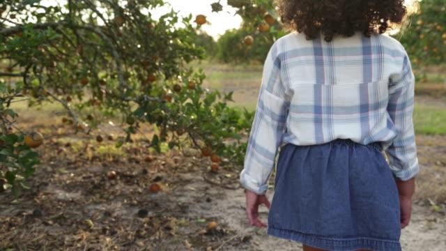 young girl walking through orange orchard stops to look at fruit. - オレンジ果樹園点の映像素材/bロール
