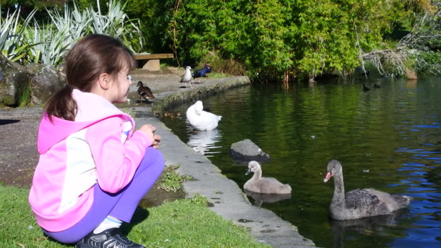 Young girl watch water birds in a pond