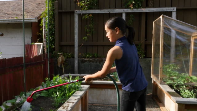 MS Young girl watering garden in backyard of home on summer evening
