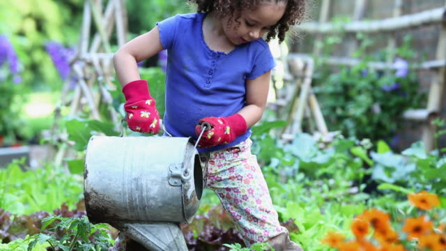 vídeos y material grabado en eventos de stock de ms tu young girl watering tomatoe plant in home vegetable garden / richmond, virginia, usa - jardinería