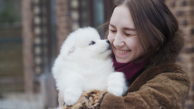 young girl with samoyed puppy outdoors - holding stock videos & royalty-free footage