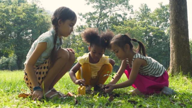 若い女の子土に苗木を植える子供たち - ヨゴレ点の映像素材/bロール