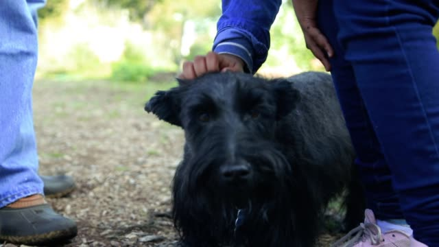 vídeos de stock, filmes e b-roll de young girls petting scottish terrier - terrier