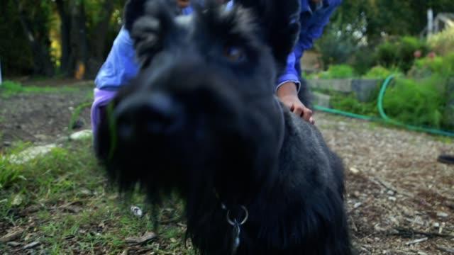 vídeos y material grabado en eventos de stock de young girls petting scottish terrier - terrier