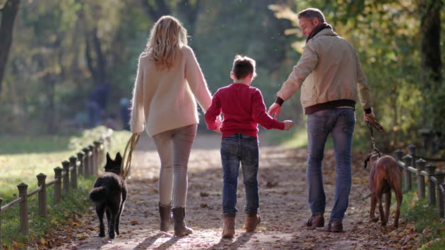 young happy family / dog owners / walking the dogs hand in hand in a park on a beautiful fall day - 2 3 years stock videos & royalty-free footage