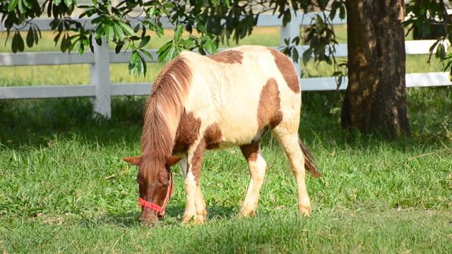 若い馬の芝生現場でのお食事 - 馬勒点の映像素材/bロール