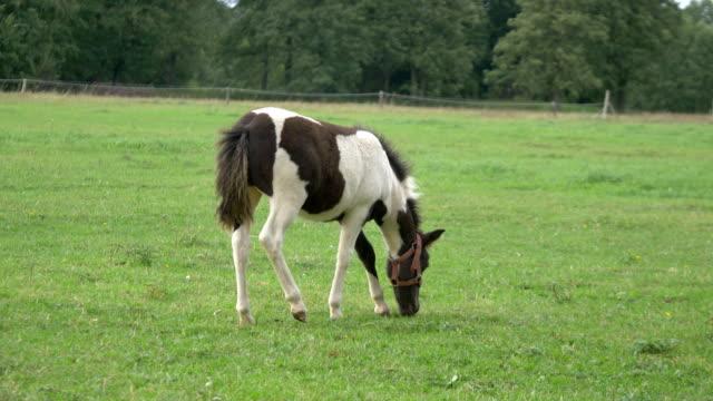 Junge Pferde stehen auf der Wiese in 4K