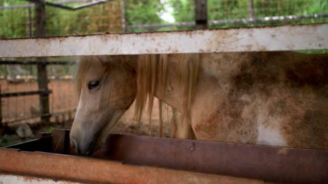 vidéos et rushes de jeunes chevaux dans une grange - accouplement cheval