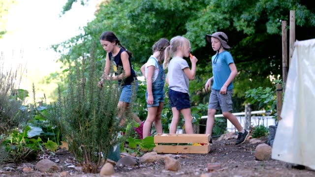 young kids spending time in the vegetable garden - digging stock videos & royalty-free footage