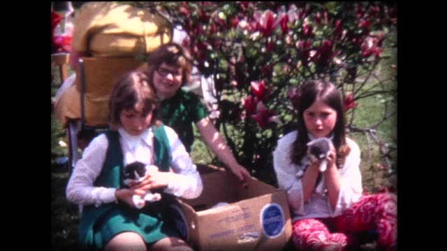 1970 young ladies and box of kittens - only girls stock videos and b-roll footage