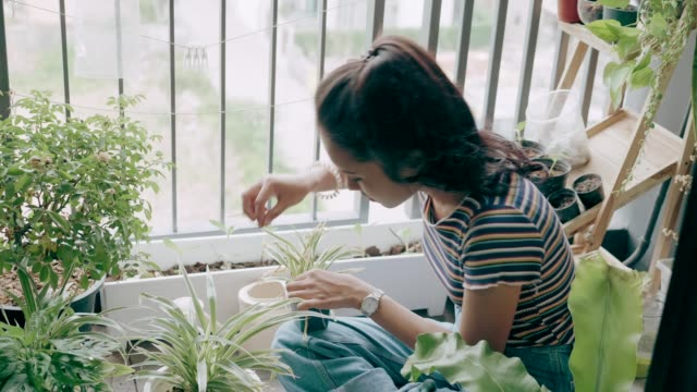 young lady planting on condominium balcony-stock vdo - bush stock videos & royalty-free footage
