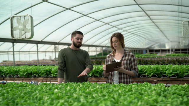 ms young man and woman growing vegetables in a greenhouse - plant nursery stock videos and b-roll footage