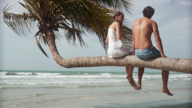 ws rv young man and woman sitting on palm tree over beach with waves rolling in/ scarborough, tobago, trinidad and tobago - サーフパンツ点の映像素材/bロール