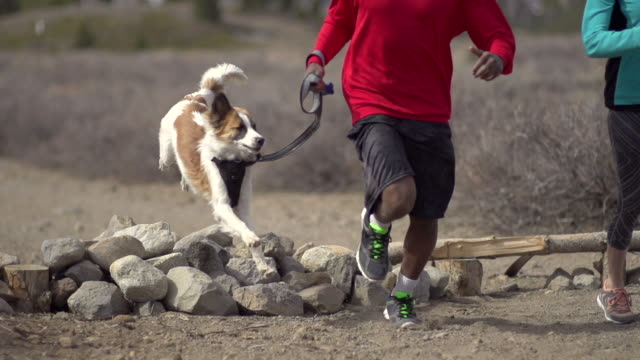 a young man and woman trail running with their dog in the mountains. - super slow motion - filmed at 240 fps - pet leash stock videos and b-roll footage