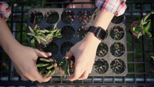 vidéos et rushes de jeune homme organisant l'usine de pot de cactus - cactus pot
