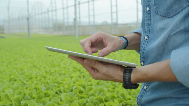 cu young man at modern greenhouse using tablet technology to manage the irrigation - idroponica video stock e b–roll