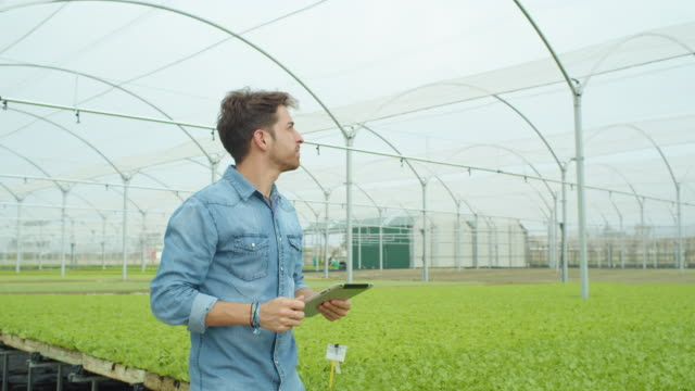 vídeos y material grabado en eventos de stock de young man at modern greenhouse using tablet technology to manage the irrigation - hidropónica