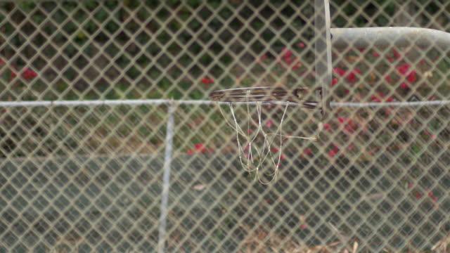 vidéos et rushes de a young man basketball player dunking on an old outdoor basketball hoop. - seulement des jeunes hommes