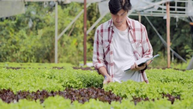 若い男が品質水耕栽培有機野菜の農場をチェックします。若い男が品質水耕栽培有機野菜の農場をチェックします。ガーデニング