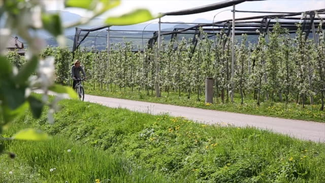 young man commutes to work on bicycle, through spring orchard - orchard stock videos & royalty-free footage