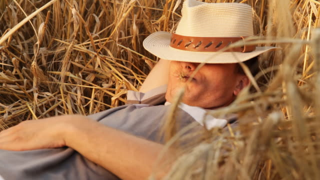 hd: young man enjoying while lying in wheat - straw hat stock videos & royalty-free footage