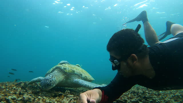 4k young man free diver diving freediving skindiving snorkeling and take selfie with green turtle. - aquatic organism stock videos & royalty-free footage