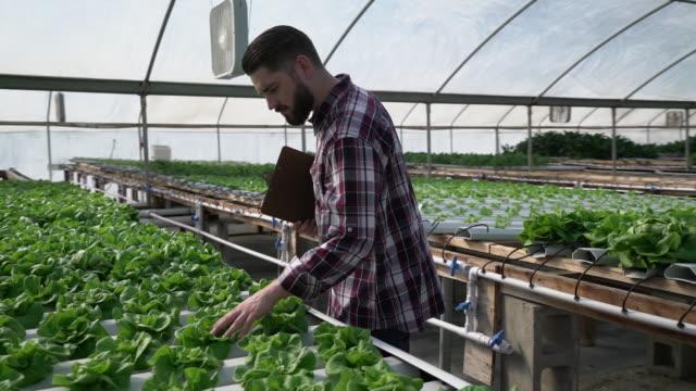 ms sm young man growing vegetables in a hydroponic farm - ansvarsfullt företagande bildbanksvideor och videomaterial från bakom kulisserna