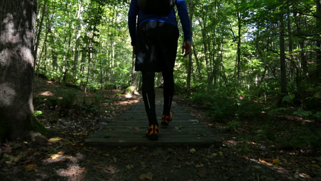 young man hiking in the forest in summer - north america stock videos & royalty-free footage