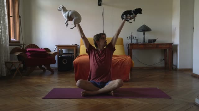 vidéos et rushes de young man lifting two dogs in air while working out - humour