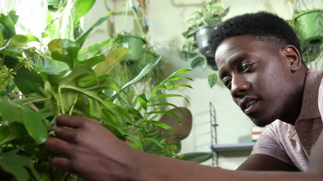 young man looking at plants in garden centre - film moving image stock videos & royalty-free footage