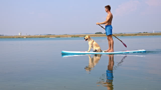 young man paddleboarding with his dog - oar stock videos & royalty-free footage