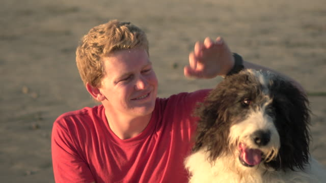 cu young man petting his dog on the beach - streicheln stock-videos und b-roll-filmmaterial