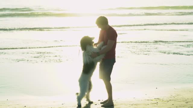 ws young man playing with his big dog on the beach - ペット点の映像素材/bロール