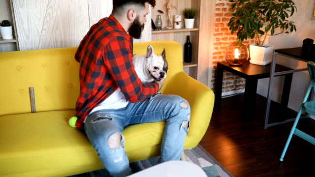young man playing with his dog on a sofa - barba peluria del viso video stock e b–roll