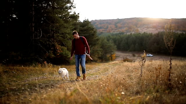 young man playing with puppy on field - hiking pole stock videos & royalty-free footage