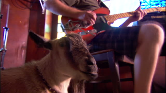 a young man plays an electric guitar while a pygmy goat stands nearby. - エレキギター点の映像素材/bロール