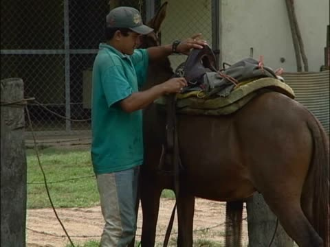 young man putting a saddle on a horse - saddle stock videos & royalty-free footage
