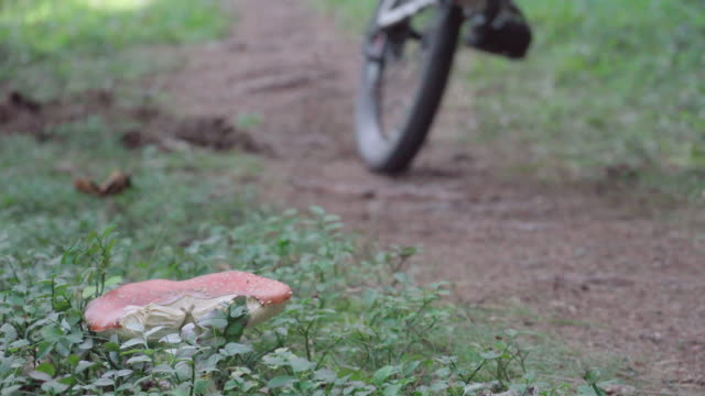 stockvideo's en b-roll-footage met a young man riding a mountain bike past a wild mushroom, biking in a forest full of trees. - giftige stof