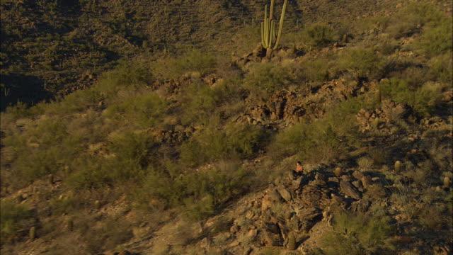 vídeos y material grabado en eventos de stock de aerial zo young man sitting on rocky saguaro cactus covered hill, tucson, arizona, usa - cactus saguaro