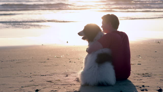 vídeos de stock e filmes b-roll de ws young man sitting with his dog at the beach - one animal