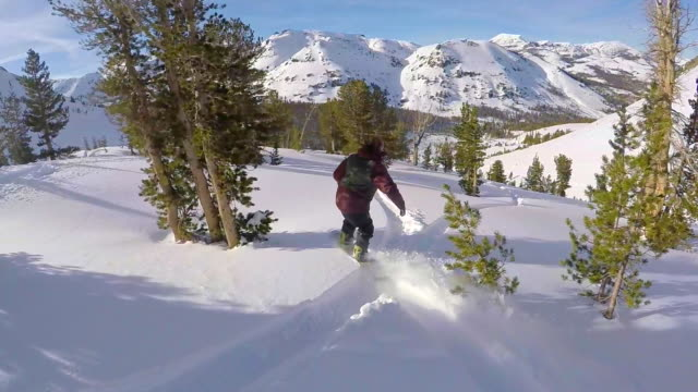 a young man snowboarding fresh power snow through trees in the mountains. - winter sport stock videos and b-roll footage
