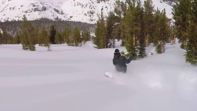 a young man snowboarding fresh power snow through trees in the mountains. - snowboard video stock e b–roll