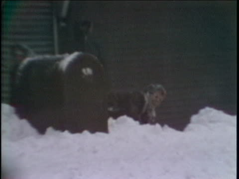 ws young man standing on mailbox surveying street ws man falling off mailbox into snowbank zoom in mcu man in snowbank laughing track ms man getting... - ngクリップ点の映像素材/bロール